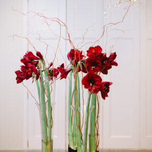 Amaryllis with curly willow