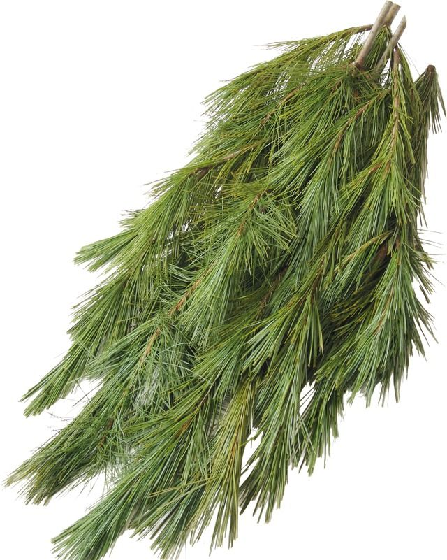 Princess Pine Boughs Bundle